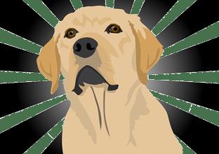 Was ist der Unterschied zwischen einer Blondine und einem Labrador? Der IQ eines Labradors ist messbar.