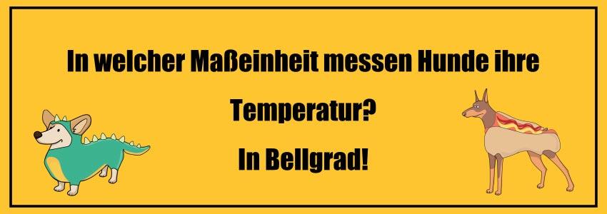Flachwitze 2018: In welcher Maßeinheit messen Hunde Ihre Temperatur? In Bellgrad!