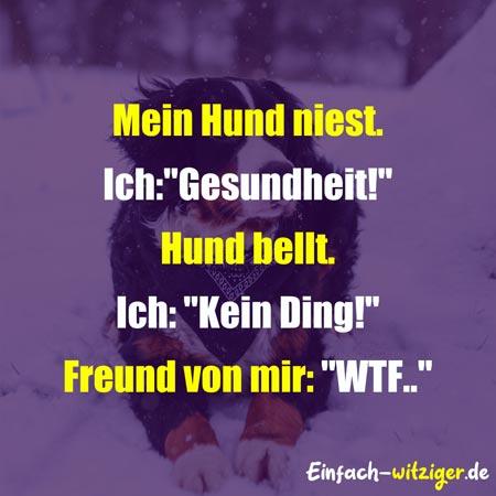 """Witzige Sprüche Coole Sprüche: Mein Hund niest. Ich:""""Gesundheit!"""" Hund bellt. Ich:""""Kein Ding!"""" Freund von mir: """"WTF..."""""""