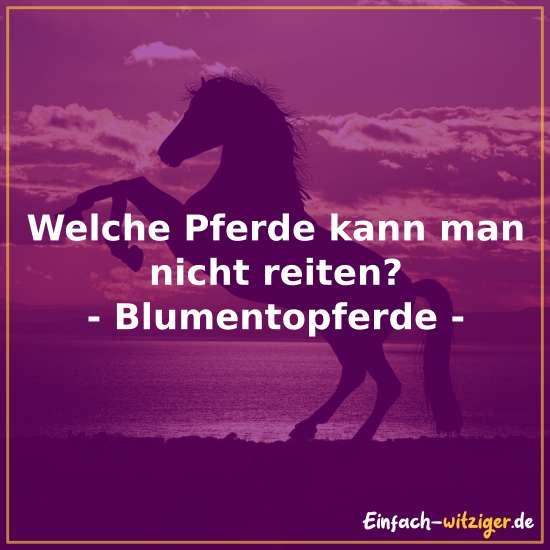 Welche Pferde kann man nicht reiten? - Blumentopferde